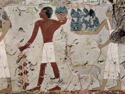 Alimentația în Egiptul antic